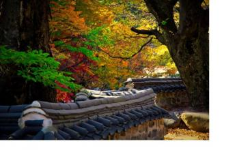 Fall Colours of Korea