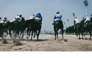 …and they're off (-track Horse Racing at Walkerhill)
