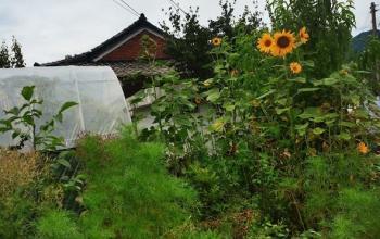 Sourdough, Hongcheon and Compost