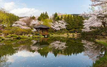 Spring Peak is Near! Where to Catch Spring Fever in South Korea