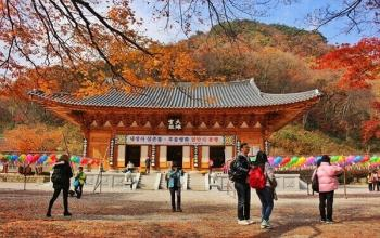 Travel Review & Tips: Fall Foliage Trip to Naejangsan National Park