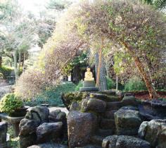 Buddha Under a Bonsai