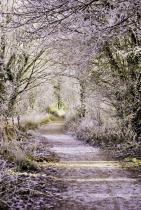 A Frozen Lane