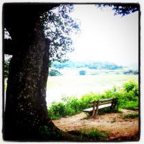 Riverside Reminiscing