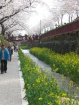 Jinhae Water Walkway